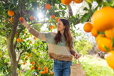 Mid adult woman picking oranges while standing in organic farm - p300m2199228 by Luna Vandoorne