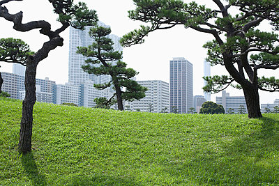 Cityscape view from Hamarikyu Park, Japan - p301m744358f by Liesel Bockl