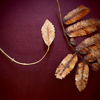 Dead Leaves - p927m940530 by Florence Delahaye