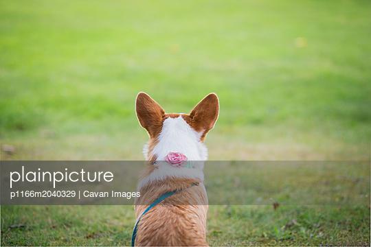 p1166m2040329 von Cavan Images
