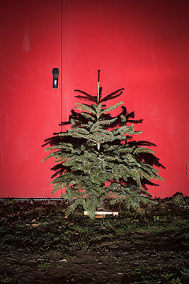 Christmas tree - p1149m1131628 by Yvonne Röder