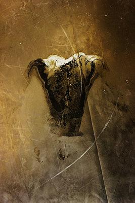 Sweat Drawing - p1636m2216371 by Raina Anderson
