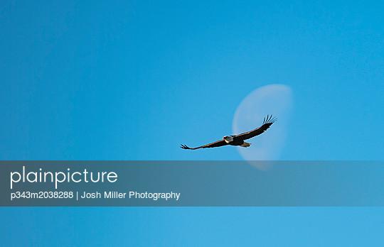 p343m2038288 von Josh Miller Photography