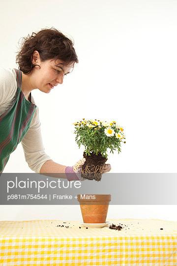 Blume eintopfen - p981m754544 von Franke + Mans
