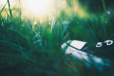 On the lawn - p1002m776934 by christian plochacki