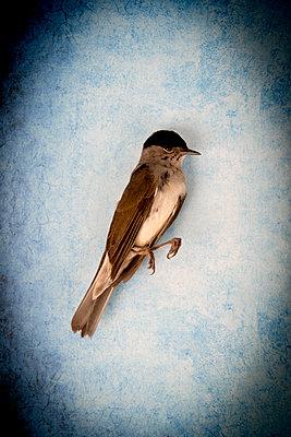 p451m2089785 by Anja Weber-Decker
