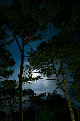Moonlight in the forest - p110m2055458 by B.O.A.