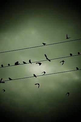 Unruhige Vögel auf der Leitung - p248m787999 von BY