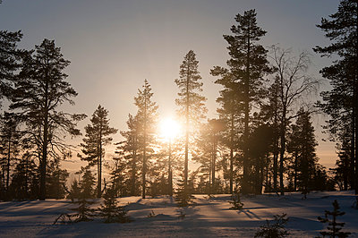 Winter landscape with setting sun - p1079m1042435 by Ulrich Mertens