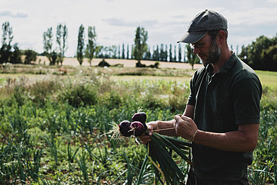 Farmer standing in a field holding freshly picked red onions. - p1100m2271516 by Mint Images