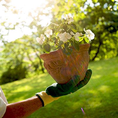 Gardening Gloves - p813m815845 by B.Jaubert