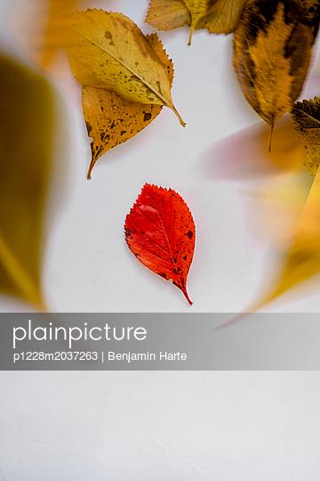 Autumn leaves - p1228m2037263 by Benjamin Harte