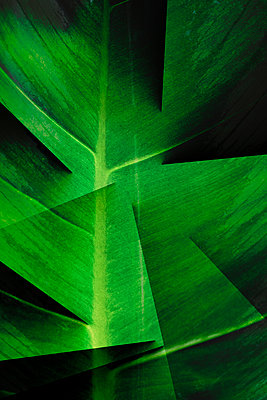Cut leaf - p1228m2110867 by Benjamin Harte