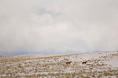Horses - p1291m1116151 by Marcus Bastel
