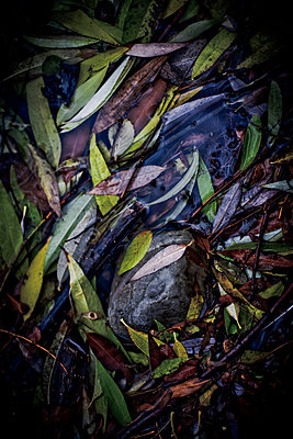 Fallen Leaves in Puddle of Water - p694m756851 by Justin Hill photography