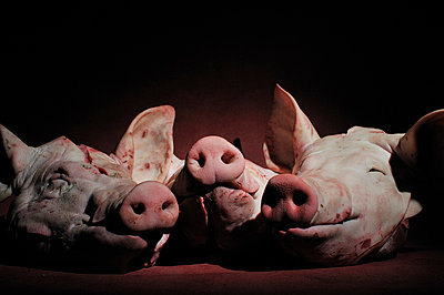 Tote Schweine - p8290109 von Régis Domergue
