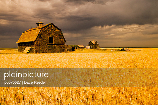 Abandoned farm, wind-blown durum wheat field near Assiniboia, Saskatchewan - p6070527 by Dave Reede