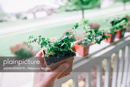 Hand holding pot of ivy - p924m2090576 by Rebecca Nelson