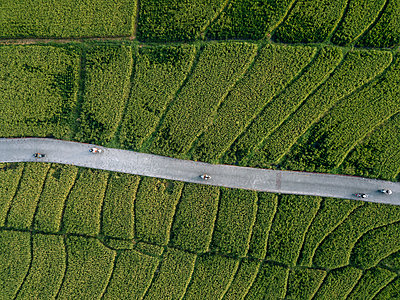 Aerial view of road amidst agricultural landscape at Bali - p1166m2112174 by Konstantin Trubavin