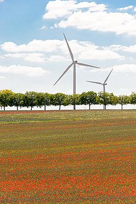 Mohnfeld mit Windkraftanlagen - p1079m1184962 von Ulrich Mertens
