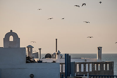 Above the roofs - p1243m1516489 by Archer