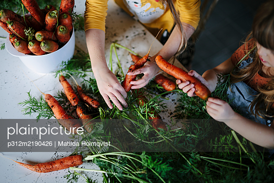 Hands holding carrots - p312m2190426 by Matilda Holmqvist
