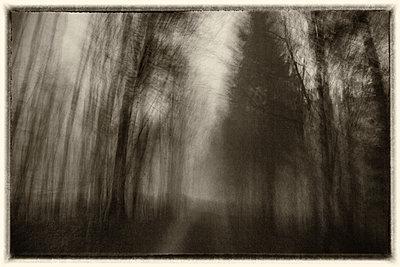 Wald - p1205m2054367 von Toni Anzenberger