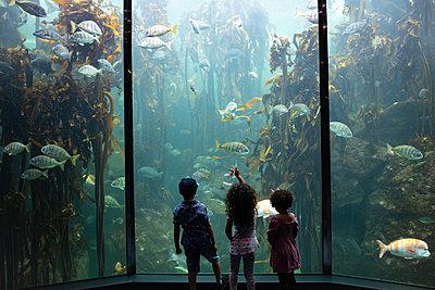 Two Oceans Aquarium, children marvel at sea animals - p1640m2246214 by Holly & John