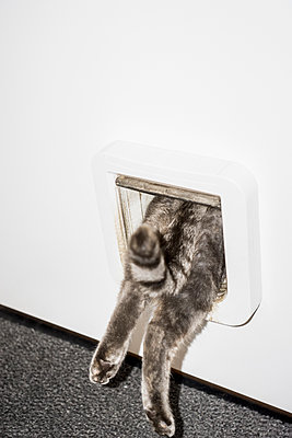 Low section of cat entering from white door - p301m1180623 by Benne Ochs