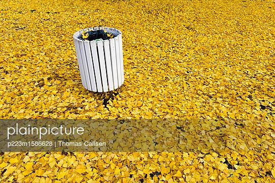 Eine Herbstfarbe - p223m1586628 von Thomas Callsen