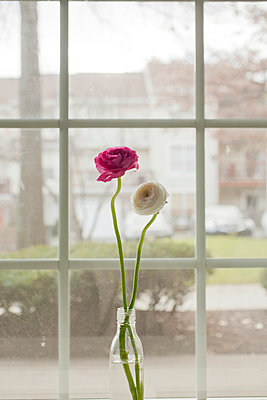 Pink and White Flower by the Window - p4630297 by Yo Oura