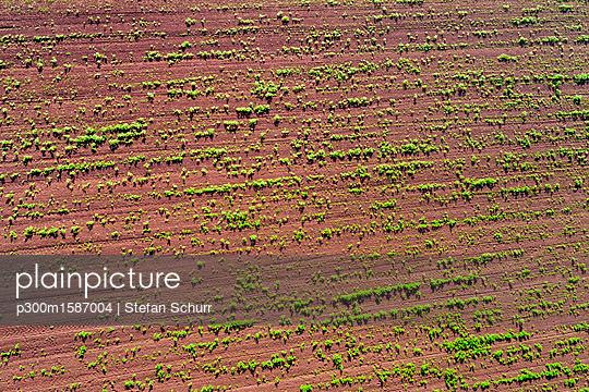 Germany, Baden-Wuerttemberg, Rems-Murr-Kreis, Aerial view of field with plants - p300m1587004 von Stefan Schurr