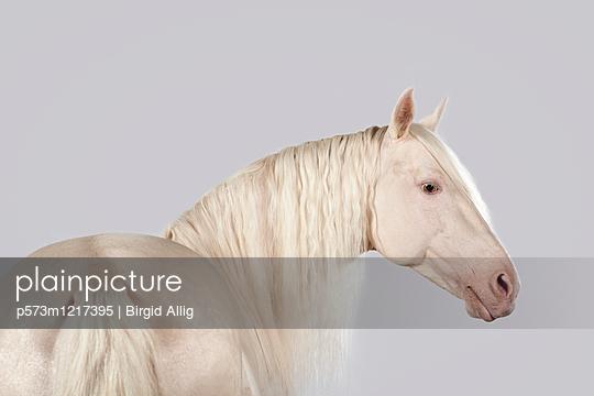 Pferdeportrait - p573m1217395 von Birgid Allig