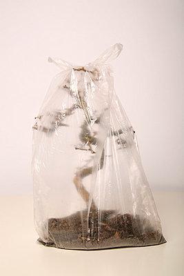 Dead bonsai III - p165m853619 by Andrea Schoenrock