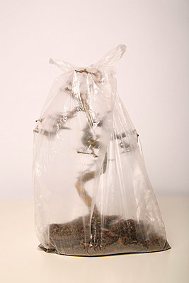 Toter Bonsai III - p165m853619 von Andrea Schoenrock