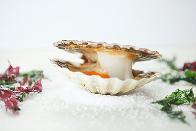 Scallop On Snow  - p847m1529162 by Laura Leyshon