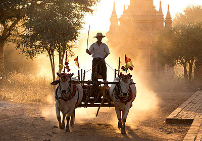 Bullock cart on a dusty track among the temples of Bagan with light from the setting sun shining through the dust, Bagan - p871m819376 by Lee Frost