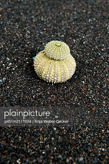 p451m2111034 by Anja Weber-Decker