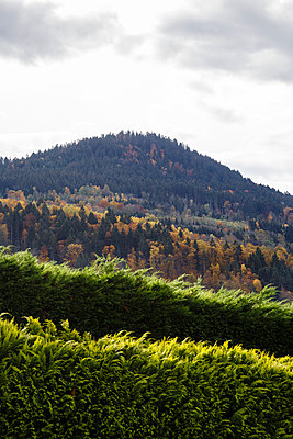 Top of a hill behind several rows of plantations - p1682m2281133 by Régine Heintz
