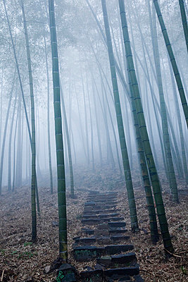 Bamboo Forest - p6692329 by Ben Miller