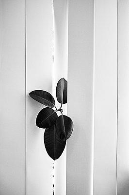 Chink - p1661m2245387 by Emmanuel Pineau