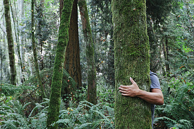 Man hugging tree in lush, green forest - p1100m876540f by Paul Edmondson