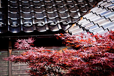 Detail of the traditional Shima House in Kanazawa, Japan, Asia - p934m1177230 by Dominic Blewett