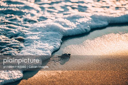 p1166m1183060 von Cavan Images