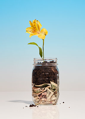 Banknotes and flower in a preserving jar - p1673m2263480 by Jesse Untracht-Oakner