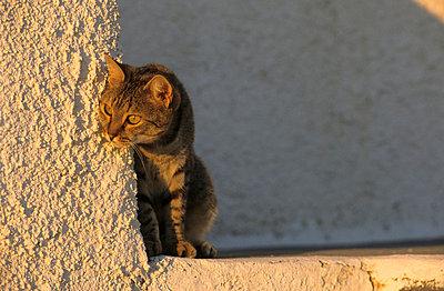 Katze - p3300491 von Harald Braun