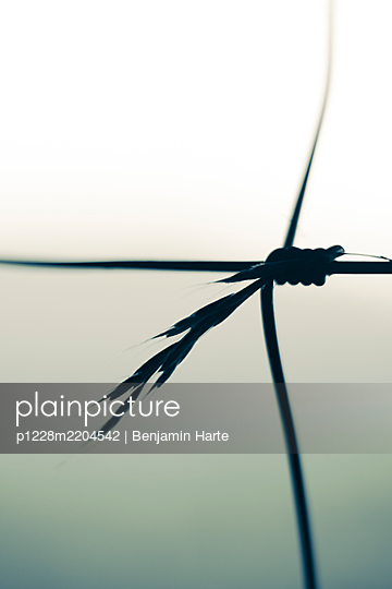 Grass caught in a wire fence - p1228m2204542 by Benjamin Harte