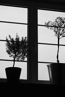 Home plants in the window - p450m1207577 by Hanka Steidle
