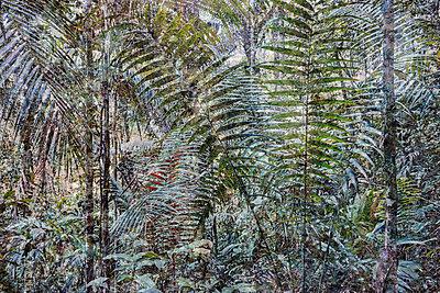 Dschungel Künstlerische Darstellung - p719m2044626 von Rudi Sebastian