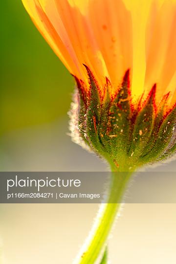 p1166m2084271 von Cavan Images